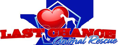 Last Hope Animal Rescue Cats