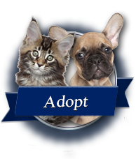 Cat And Dog Rescue Serving D C Maryland And Virginia Last Chance